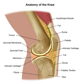 knee replacement surgery | northwestern medicine, Human body