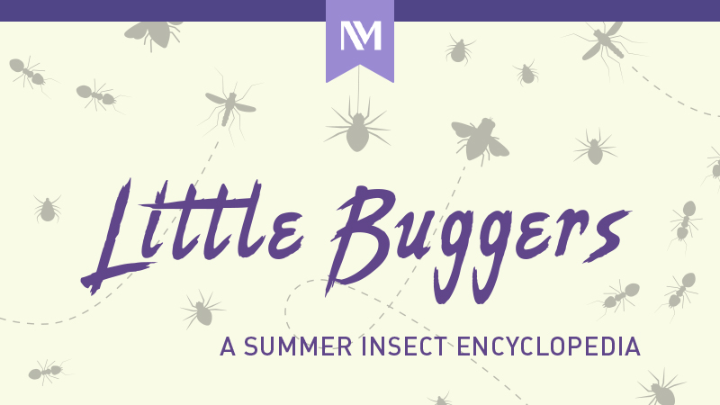 BugsOfSummer_Infographic_Thumbnail