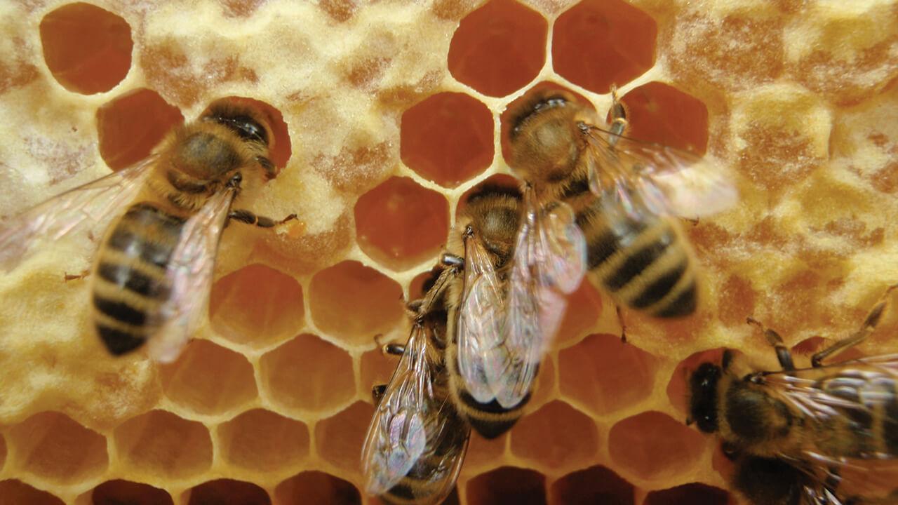 тату детям о пчелиных сотах в картинках уход