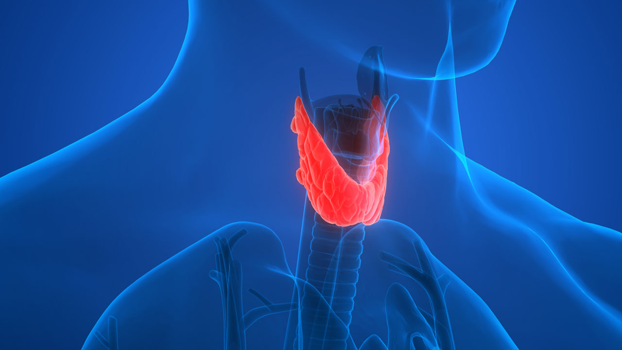 7 Facts About Your Thyroid Northwestern Medicine